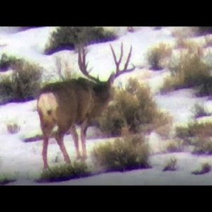 Winter Scouting 2019 - MonsterMuleys.com